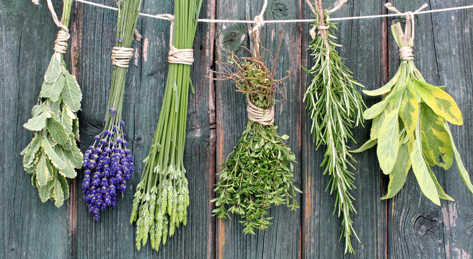 Mix di erbe aromatiche come farle per eliminare il sale - Erbe aromatiche in casa ...